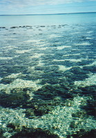 Shark Bay's stromatolites