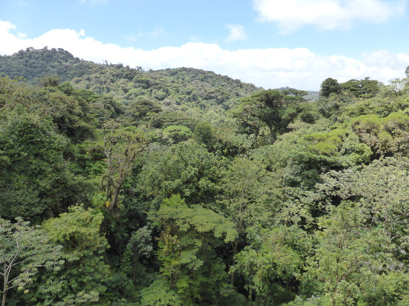 The view from the canopy walk