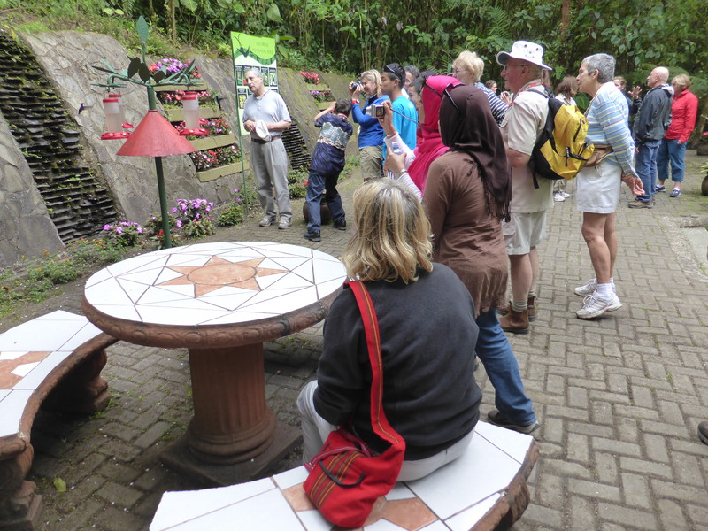 Large groups of tourists flocking round the hummingbirds