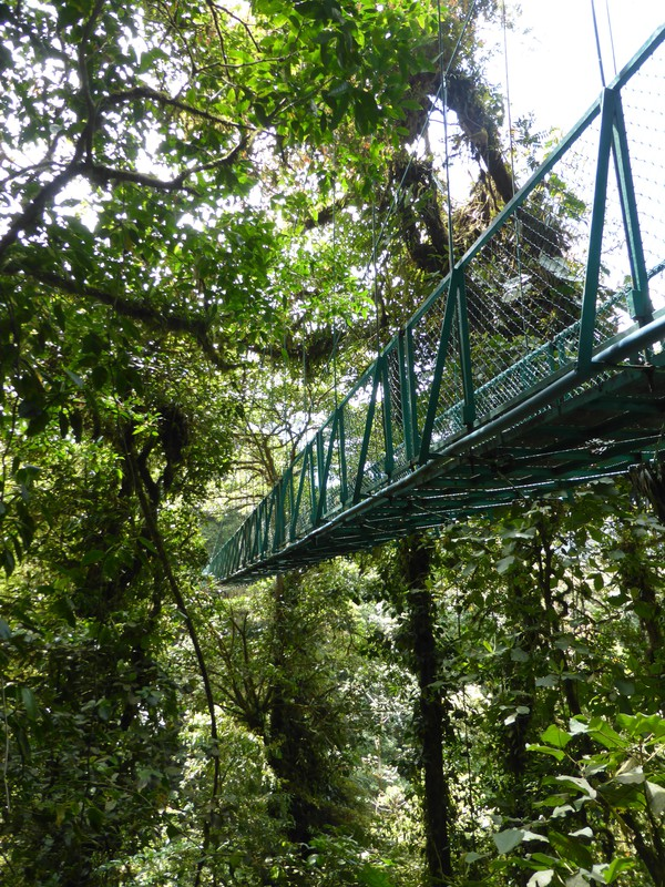 One of the bridges on the canopy walk