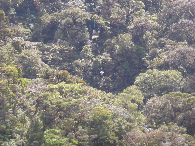Ziplining the cloud forest: the tiny blob in the middle of the photograph is Mark