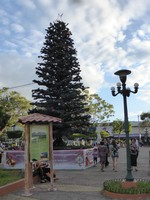 The Christmas tree in the main plaza in Santa Ana