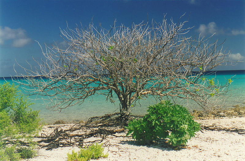 A tree on the atoll
