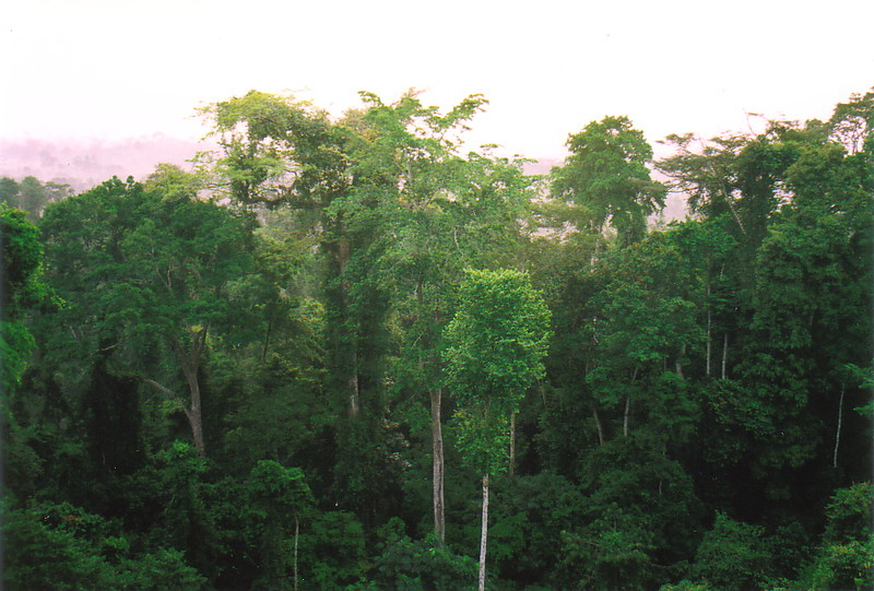 Rainforest canopy in Kakum National Park