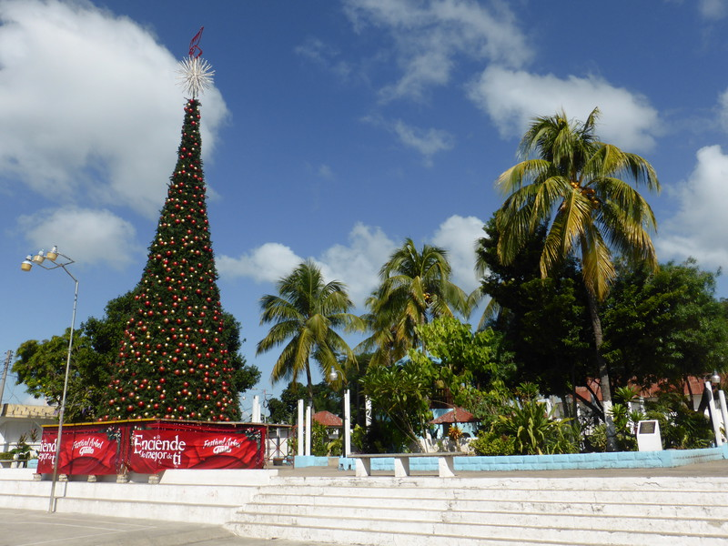 The rather impressive Christmas tree in the main plaza