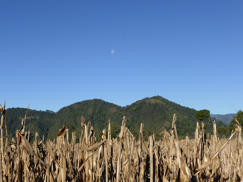 The corn fields along the crater rim