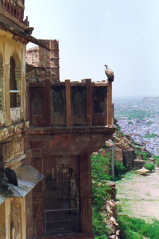 Birds perched on the ramparts of Mehrangarh Fort