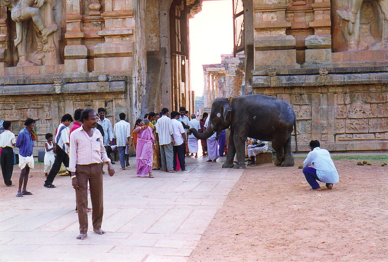 An elephant at the entrance to Brihadesvada Temple