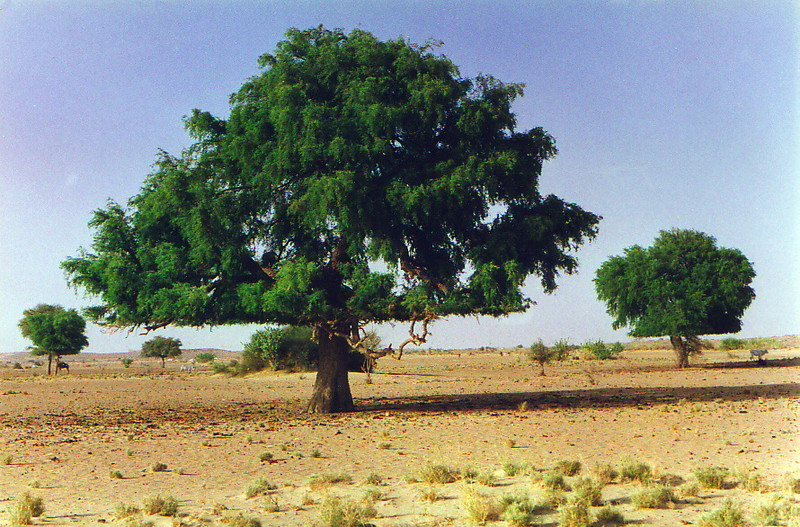 A tree with a flat bottom