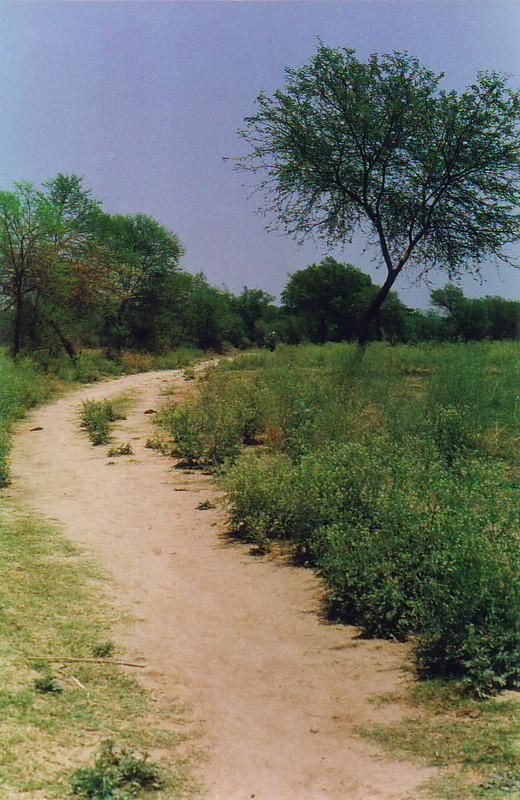 A pretty path along the east bank of the Ganges