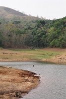 Distant elephants by Periyar Lake