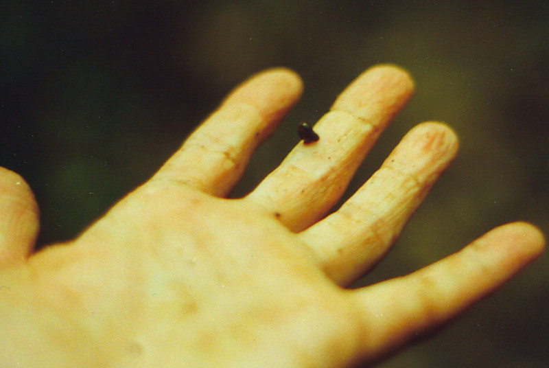 A leech attached to Mark's finger
