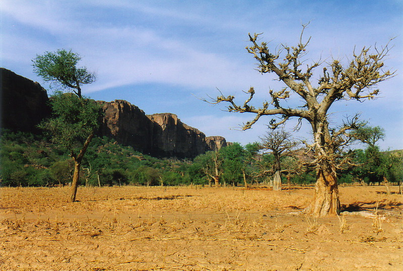 A baobab tree with the falaise in the background