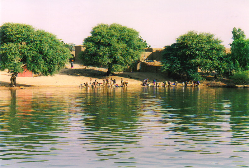 Trees along the banks of the River Niger