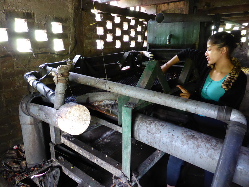 Karla with the de-pulping machine
