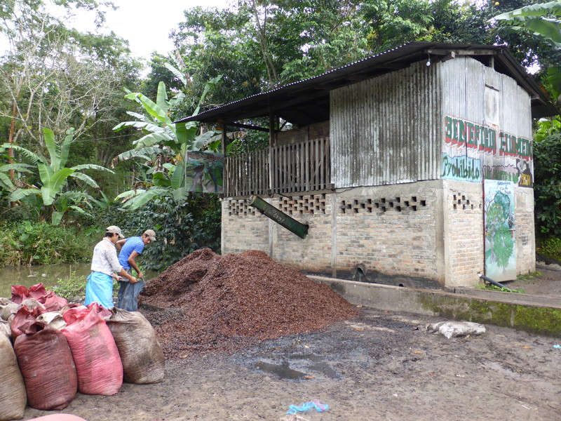 The de-pulping plant, where workers are collecting the bean skins to use as fertiliser