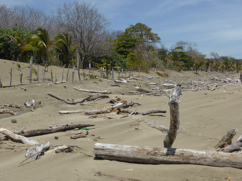 The Peninsula de Azuero is a dry part of the world, and the beaches can feel a bit like deserts