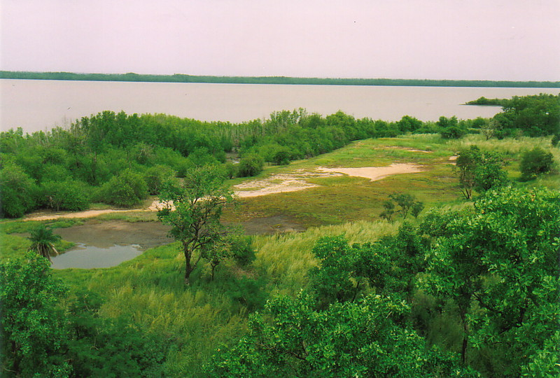The River Gambia from Toubabkollon Point
